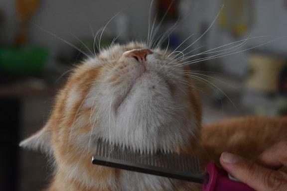 Katze bekommt das Fell gebürstet