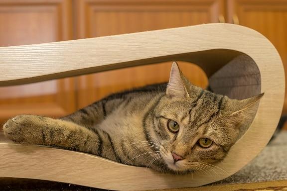 Katze liegt in einem Möbelstück aus Holz